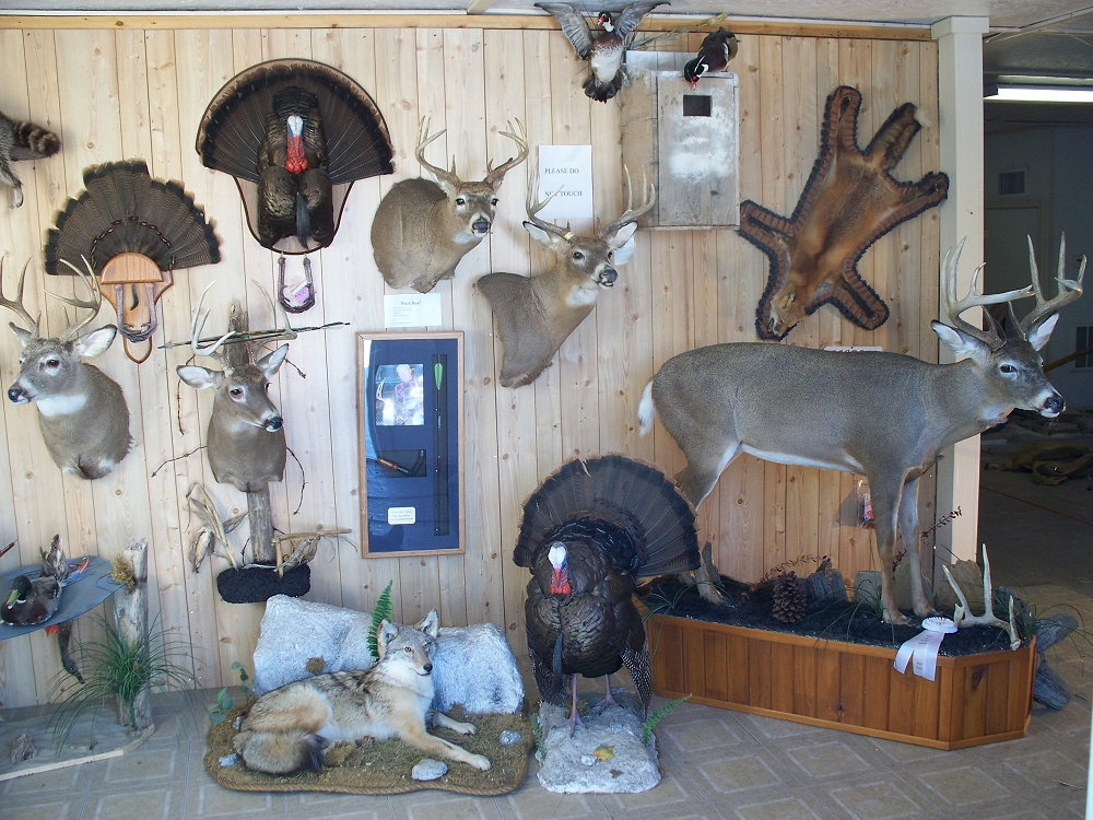 Dating a taxidermist - Dating site for those seeking love seriously