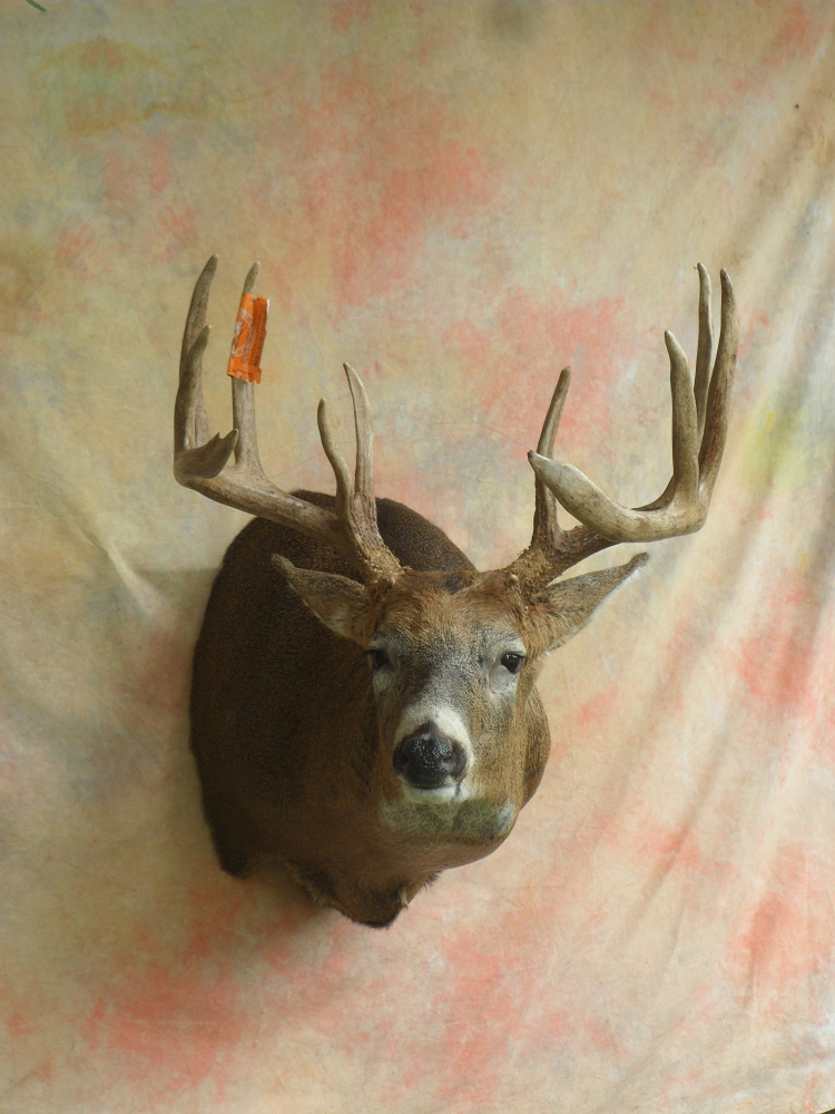 North American Taxidermy Mounts A Sportsmans Dream